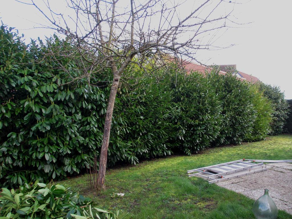 beaux arbres entretien de jardin