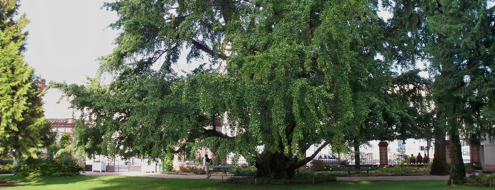 Beaux arbres elagage et entretien de jardin d p 37 41 for Elagage entretien jardin