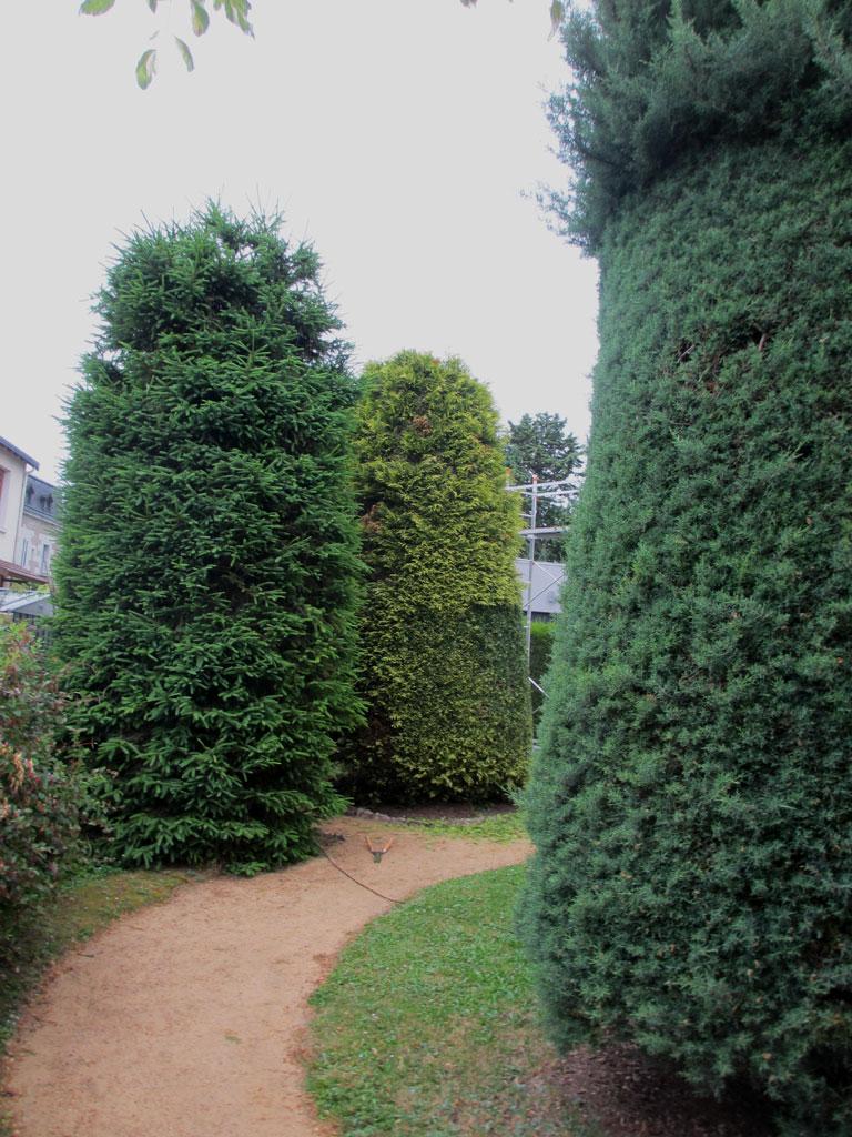 Beaux arbres entretien de jardin for Arbres de jardin